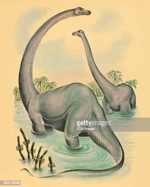 Two Brontosaurus