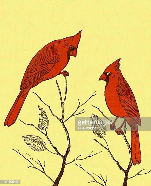 カーディナルの 2 つの鳥