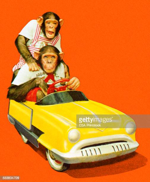 two chimpanzees driving a toy car - two animals stock illustrations