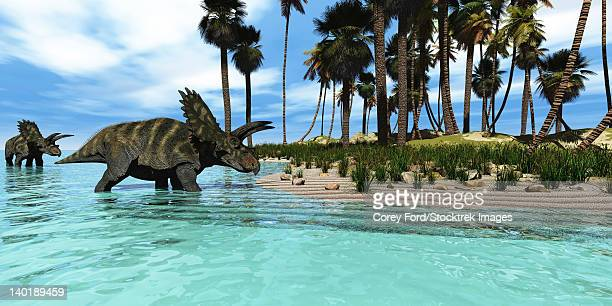 Two Coahuilaceratops dinosaurs wade through tropical waters to reach new vegetation in prehistoric times.