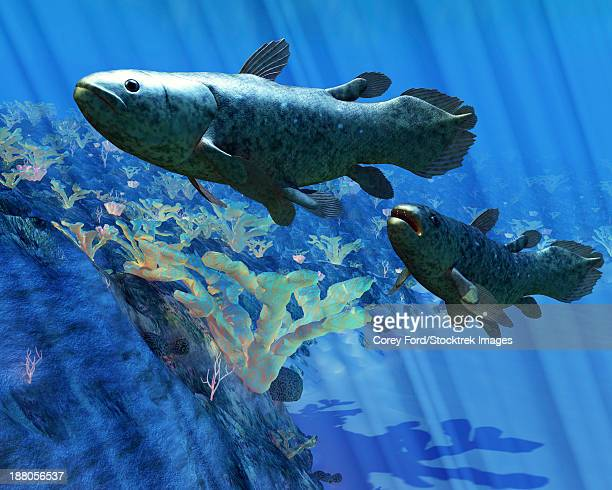 two coelacanth fish swimming undersea. - paleozoology stock illustrations
