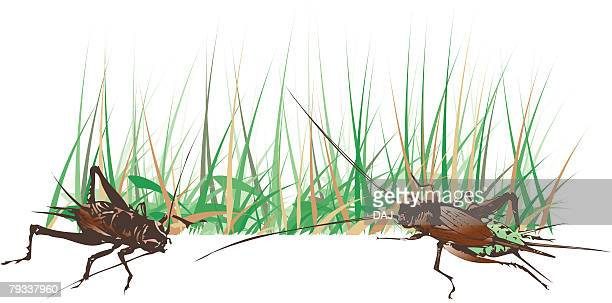 two crickets in grass, high angle view - cricket insect stock illustrations