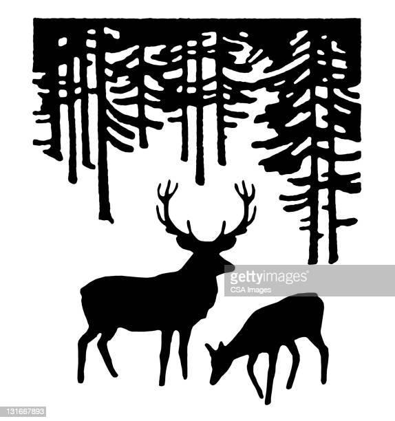 illustrations, cliparts, dessins animés et icônes de two deer in the woods - biche