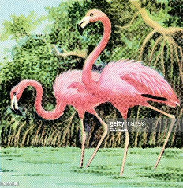 two flamingos - flamingo stock illustrations, clip art, cartoons, & icons