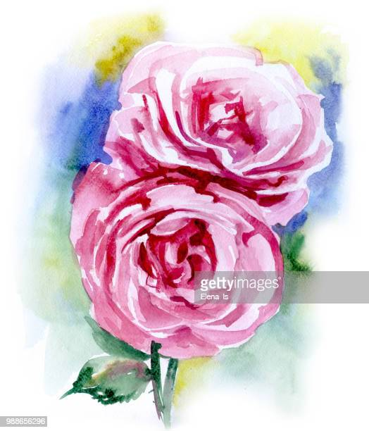 two flowers roses on a white background. watercolor - rose petals stock illustrations, clip art, cartoons, & icons