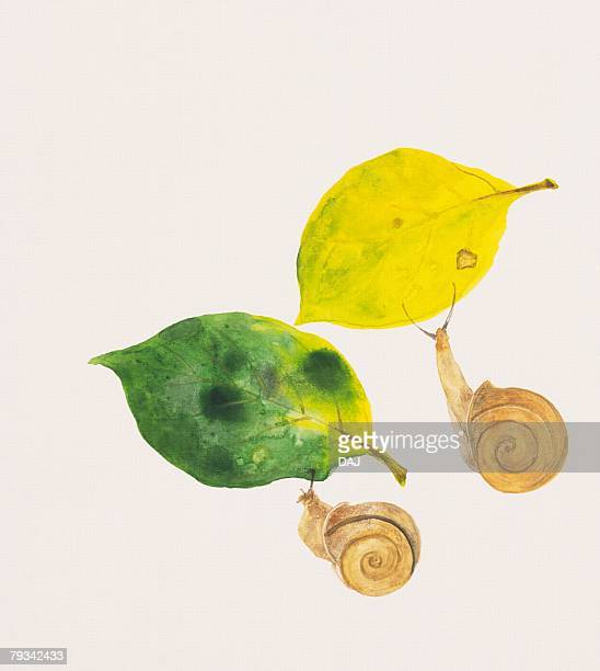 two garden snails and fallen leaves in autumn color - rainy season stock illustrations, clip art, cartoons, & icons