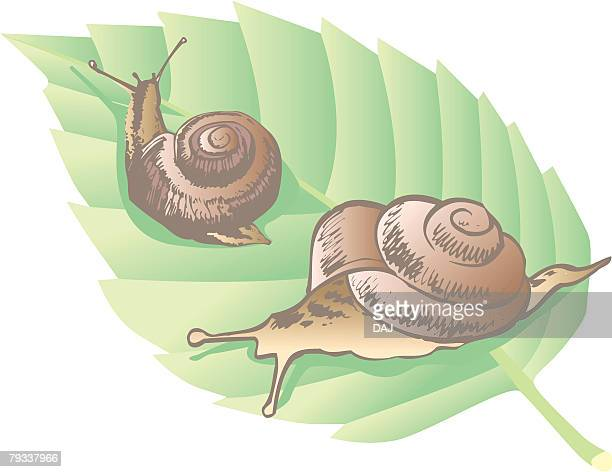 two garden snails on a leaf, close up - rainy season stock illustrations, clip art, cartoons, & icons