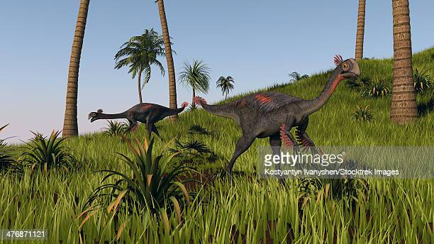 Two gigantoraptors in a grassy field.