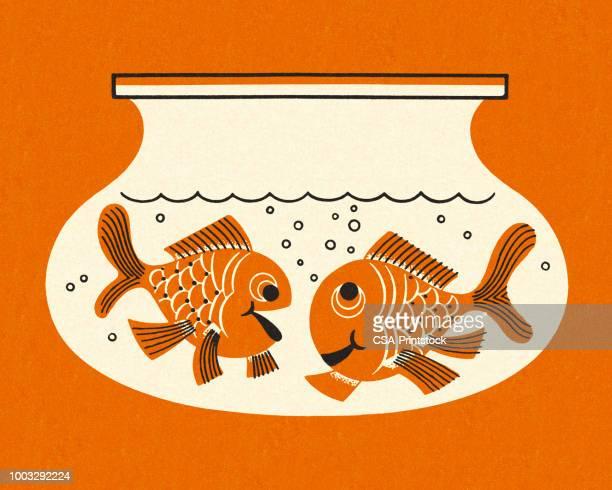 illustrations, cliparts, dessins animés et icônes de deux poissons rouges dans un aquarium - poisson rouge