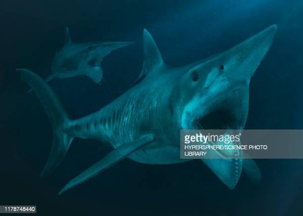 ilustraciones, imágenes clip art, dibujos animados e iconos de stock de two helicoprions underwater, illustration - paleontología