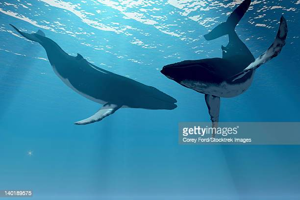 two humpback whales frolic in the rays of light from the sun. - humpback whale stock illustrations, clip art, cartoons, & icons