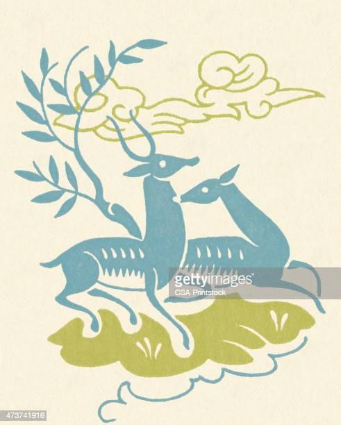 illustrations, cliparts, dessins animés et icônes de deux impala - biche