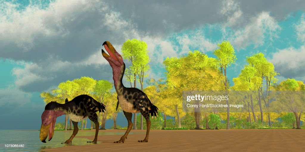 Two Kelenken terror birds come down to a lake to drink. : stock illustration