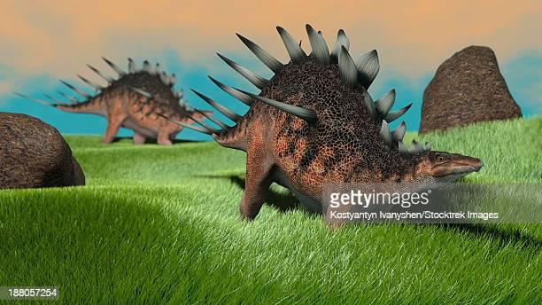 Two Kentrosaurus dinosaurs walking across a grassy field.