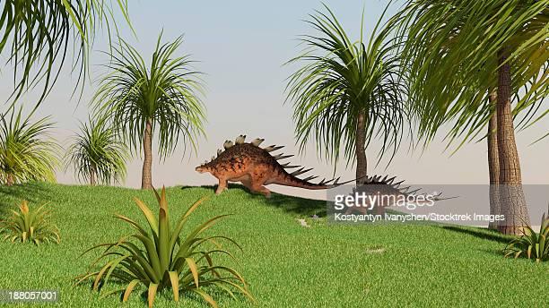 two kentrosaurus dinosaurs walking across an open field. - thyreophora stock illustrations, clip art, cartoons, & icons