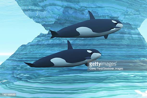 two killer whales swim around submerged icebergs. - killer whale stock illustrations, clip art, cartoons, & icons