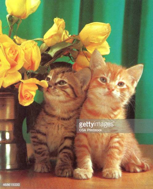 two kittens and flowers - two animals stock illustrations