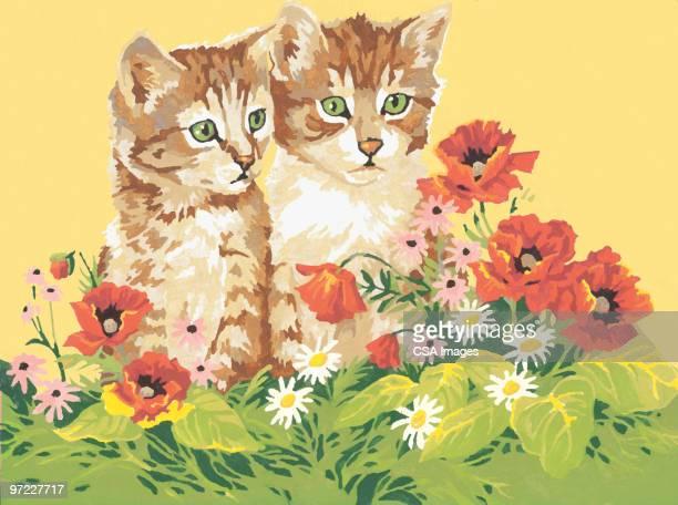 ilustraciones, imágenes clip art, dibujos animados e iconos de stock de two kittens in poppies - producto artístico