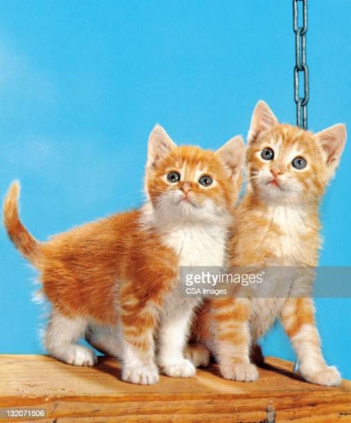 two kittens on a swing - two animals stock illustrations