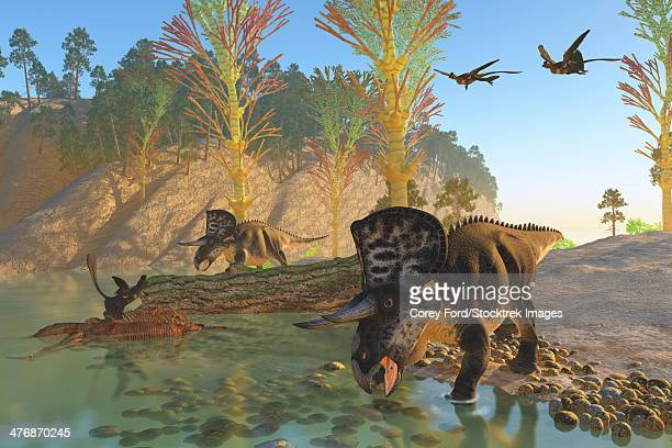 Two Microraptor birds fly in to join another sitting on an old skeleton as Zuniceratops dinosaurs come down to the river for a drink.