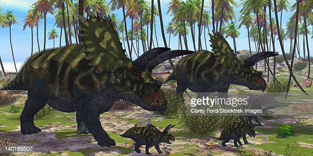Two mother Coahuilaceratops dinosaurs escort their baby hatchlings among the palm trees of prehistoric times.