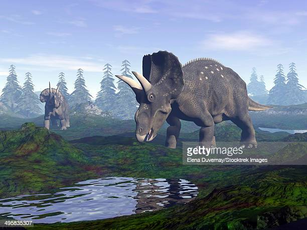 two nedoceratops dinosaurs walking to water puddle in the morning light. - lakeshore stock illustrations