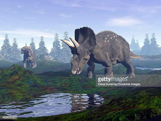 ilustraciones, imágenes clip art, dibujos animados e iconos de stock de two nedoceratops dinosaurs walking to water puddle in the morning light. - triásico