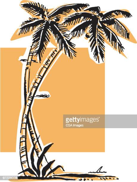 two palm trees - pacific islands stock illustrations
