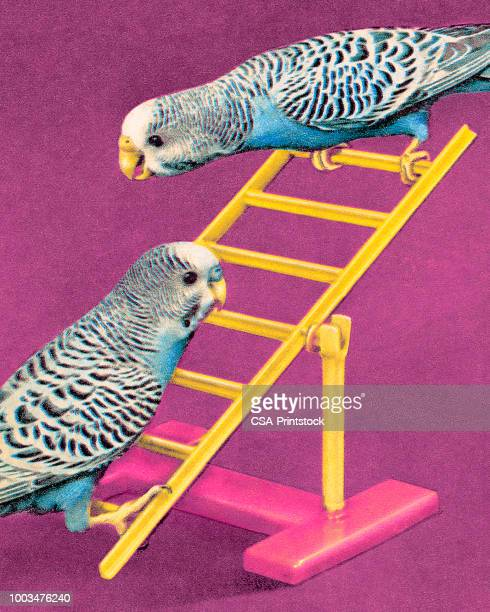two parakeets - two animals stock illustrations