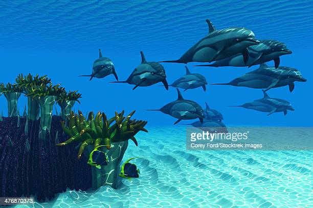 Two pennant fish scamper away as a pod of striped dolphins race by a reef of anemones.