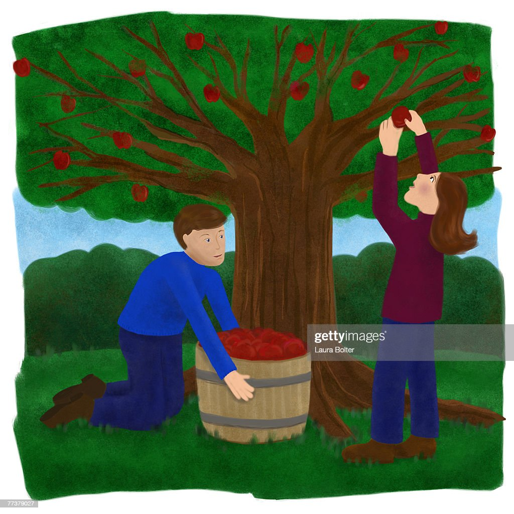 Two people picking apples from the tree : Illustration