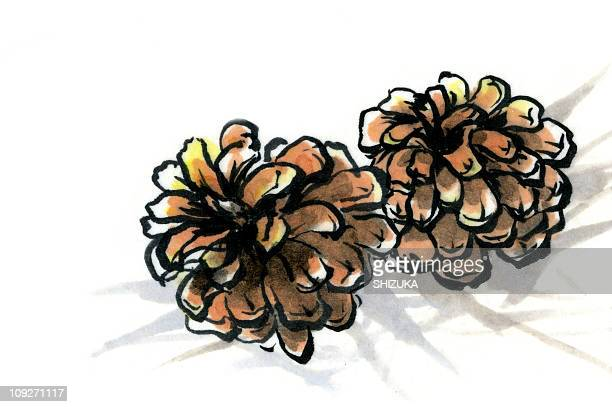 two pine cones - plant stage stock illustrations, clip art, cartoons, & icons