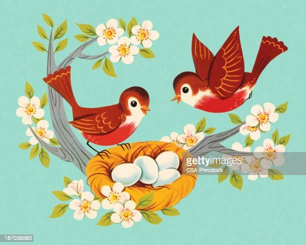 ilustraciones, imágenes clip art, dibujos animados e iconos de stock de dos robins y anidado - animal egg