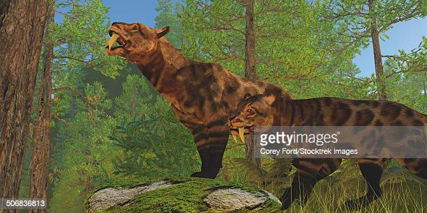 Two Saber-Toothed Cats in the Eocene Age look for their next prey in a pine forest.