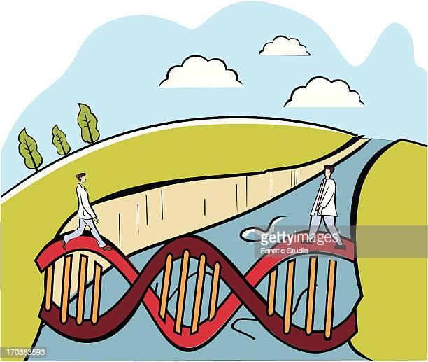 two scientists crossing a dna bridge - aqueduct stock illustrations, clip art, cartoons, & icons