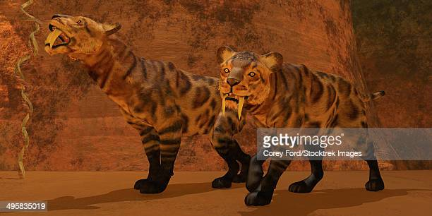 Two Smilodon cats find protection in a vast cave system in the Eocene epoch.