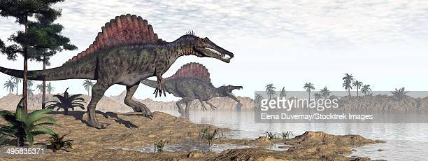 two spinosaurus dinosaurs walking to the water in a desert landscape. - animal spine stock illustrations, clip art, cartoons, & icons