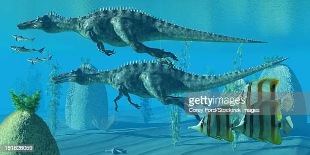 ilustraciones, imágenes clip art, dibujos animados e iconos de stock de two suchomimus dinosaurs dive and search for big fish prey to capture and eat. - biodiversidad