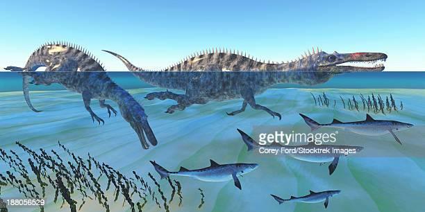 ilustraciones, imágenes clip art, dibujos animados e iconos de stock de two suchomimus dinosaurs hunt small sharks in shallow ocean waters. - biodiversidad