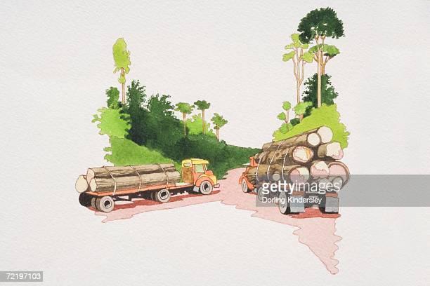 ilustrações de stock, clip art, desenhos animados e ícones de two trucks loaded with stacked timber driving on forest path, rear view. - desmatamento