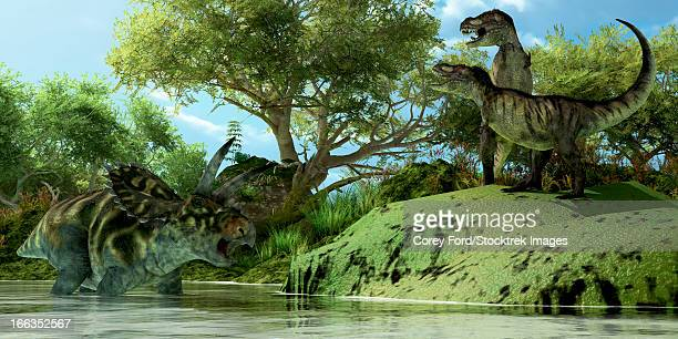 Two Tyrannosaurus dinosaurs roar in frustration as a Coahuilaceratops dinosaur uses the water as a refuge from attack.