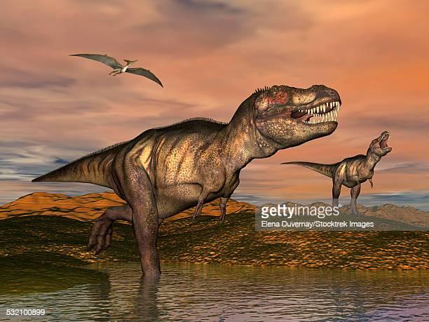 ilustraciones, imágenes clip art, dibujos animados e iconos de stock de two tyrannosaurus rex dinosaurs with pteranodon bird flying above in desert landscape. - triásico