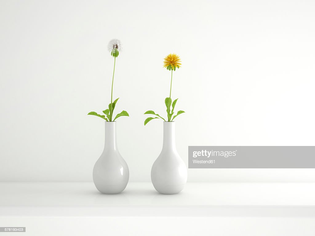 Two white flower vases with blowball and dandelion 3d rendering two white flower vases with blowball and dandelion 3d rendering stock illustration reviewsmspy