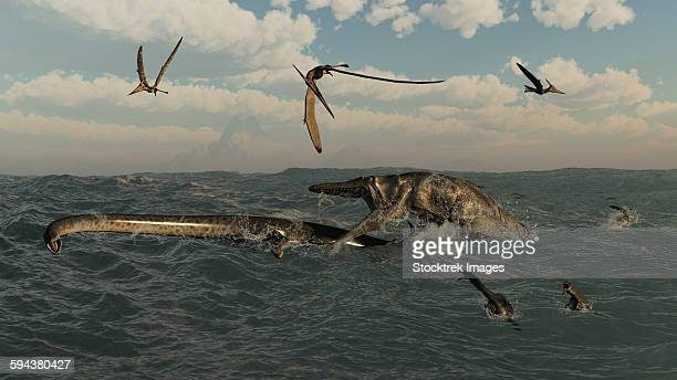 ilustraciones, imágenes clip art, dibujos animados e iconos de stock de tylosaurus attacks a styxosaurus in cetaceous waters. - plesiosaurio