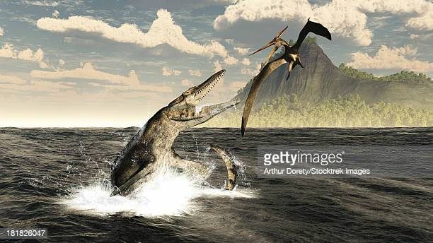 a tylosaurus jumps out of the water, attacking a pteranodon during the mid-cretaceous period in the central sea spanning north america from canada to mexico.  - prehistoric era stock illustrations