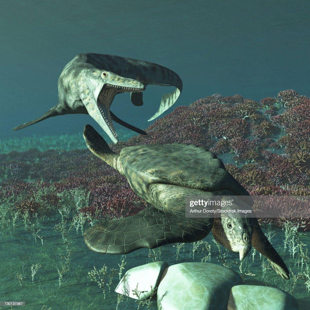 Tylosaurus proriger preying on a giant Archelon sea turtle. : stock illustration