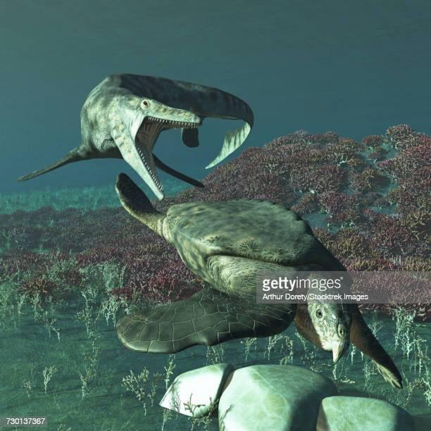 Tylosaurus proriger preying on a giant Archelon sea turtle.