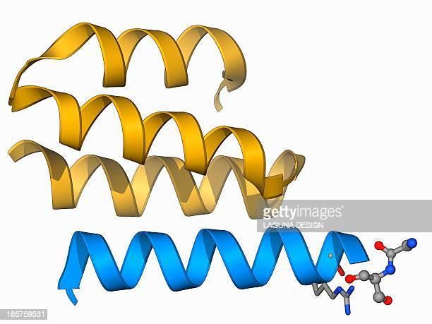 type iv collagen, molecular model - collagen stock illustrations
