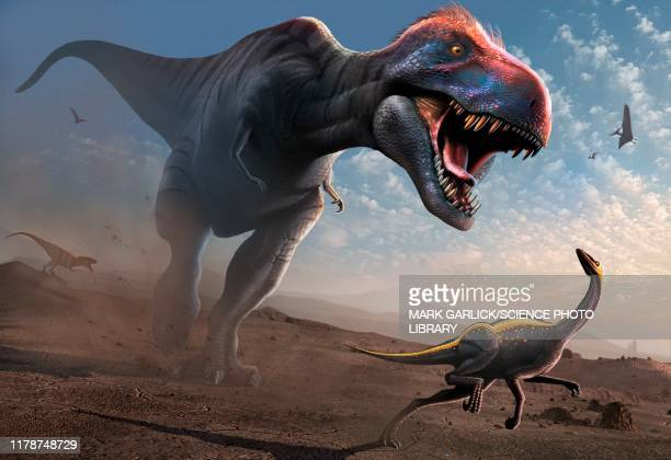 tyrannosaur chasing an ornithomimus, illustration - artistic product stock illustrations
