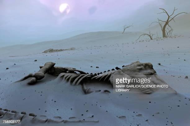 ilustraciones, imágenes clip art, dibujos animados e iconos de stock de tyrannosaurs rex skeleton - animal extinto